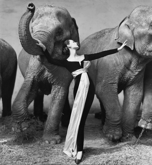 richard avedon za dior